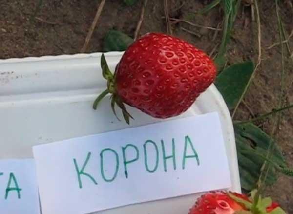 Корона-ягода-клубники-фото