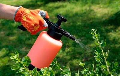 Борьба с нематодой химикатами
