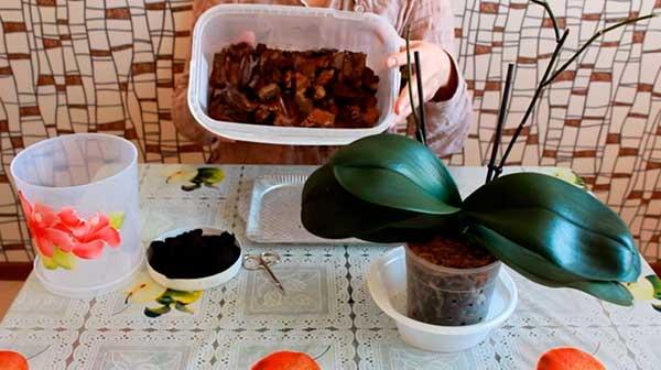 Что-нужно-для-пересадки-орхидеи-фото