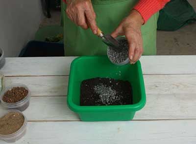 Замиокулькас-почва-фото