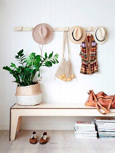 Замиокулькас (долларовое дерево): уход в домашних условиях, фото комнатного растения