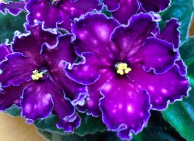 Как-выглядит-цветок-танец-галктик-фото