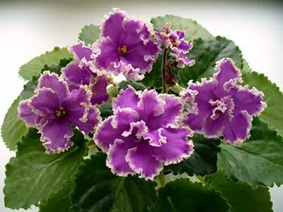 Красивые-цветы-эсмеральды-ле-фото