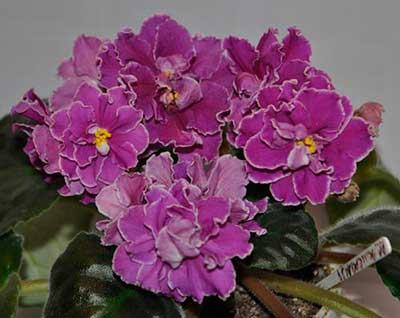 пример-цветка-рс-эсмеральда-фото