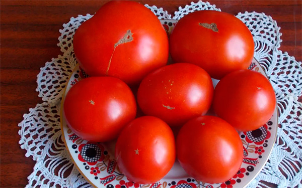 Плоды-монгольского-карлика-фото