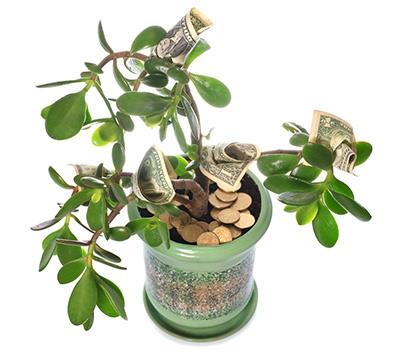 денежное-дерево-с-купюрами-фото