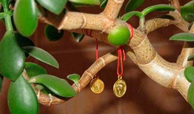 монетки-на-денежном-дереве-фото