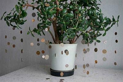 суеверия-о-денежном-дереве-фото