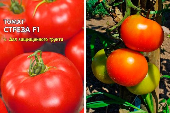 томат-стреза-фото