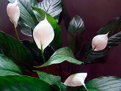 цветок-женское-счастье-фото
