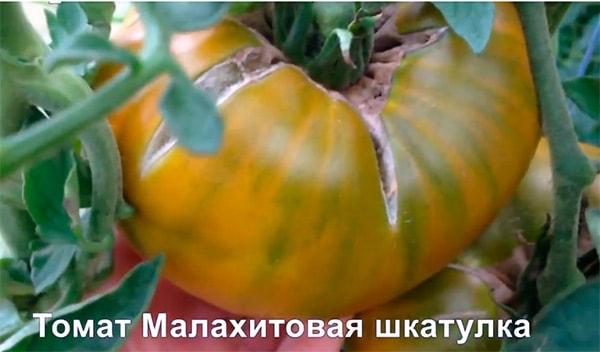 Малахитовая-шкатулка-куст-фото