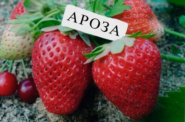 клубничка-Ароза-фото