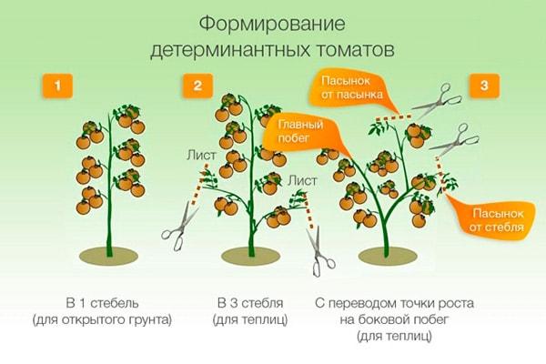 пасынкование-детерминантных-сортов-помидор-фото