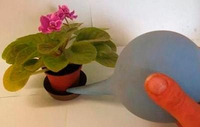 watering-violet-in-pallet-photo