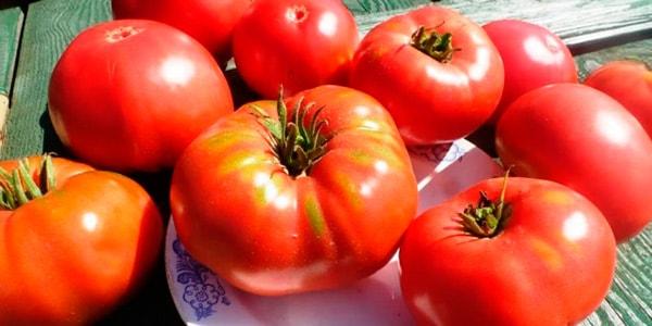 томат-гордость-сибири-фото