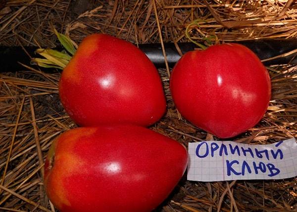 томат-орлиный-клюв-фото