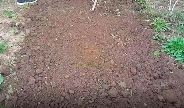 Капаем-грядку-под-клубнику-фото