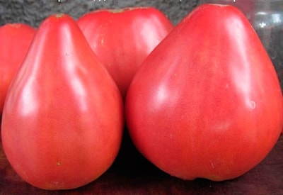 плоды-помидор-батяня-фото
