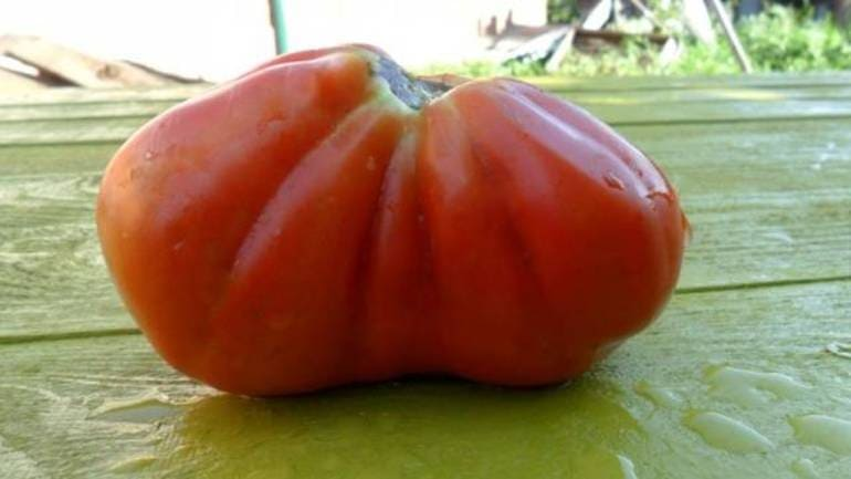 Особенности томатов пузата хата