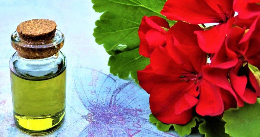 Фото масла герани и соцветий