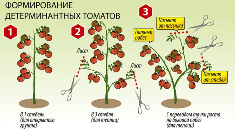 Схема пасынкования детерминантных томатов