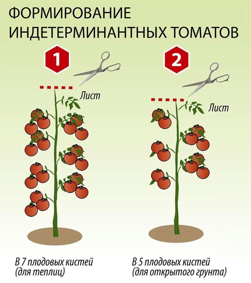 Схема пасынкования индетерминантных томатов