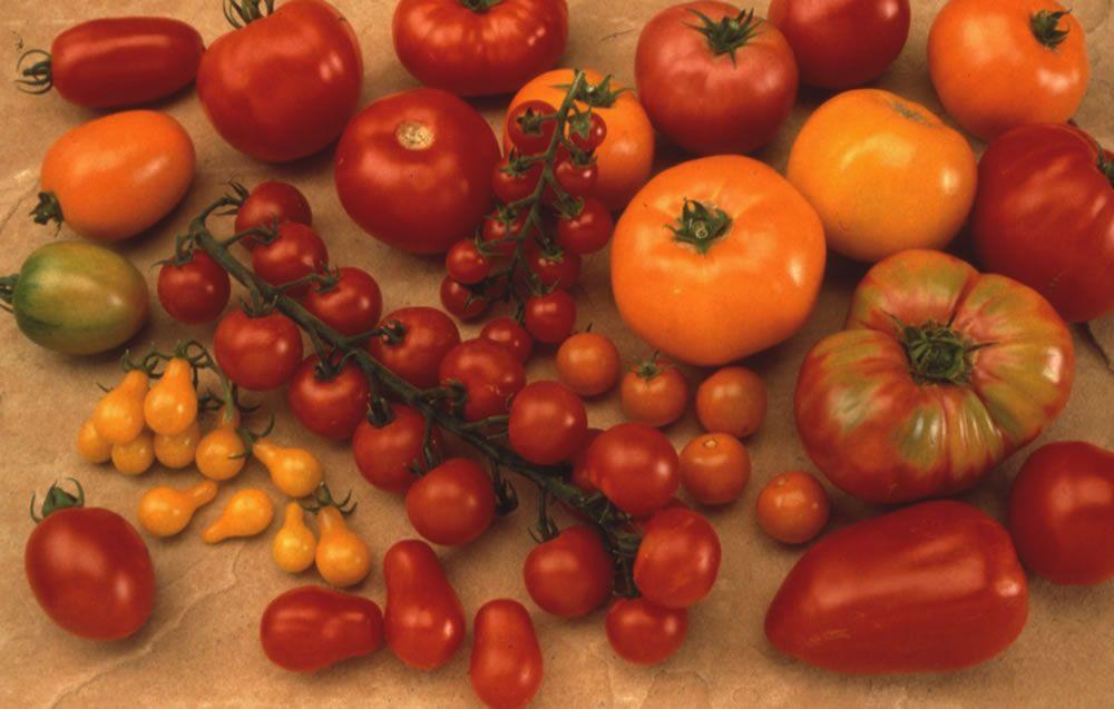 Фото помидоров разного сорта