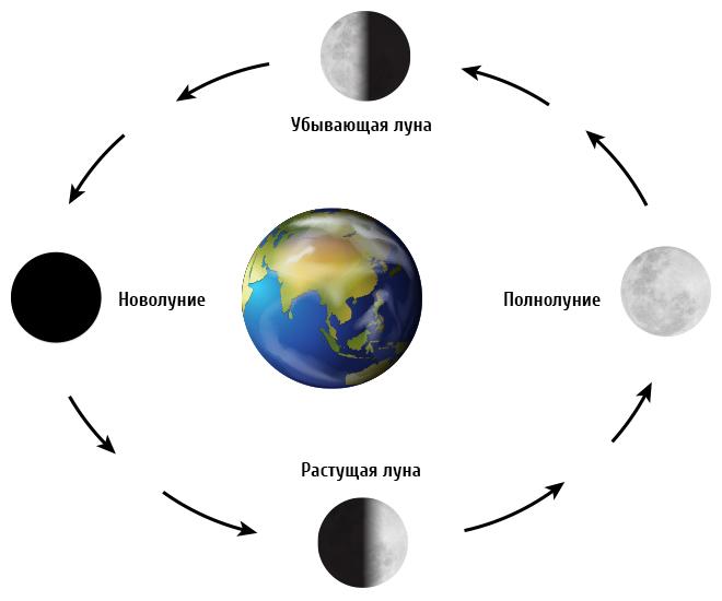 Схематичное изображение фаз Луны