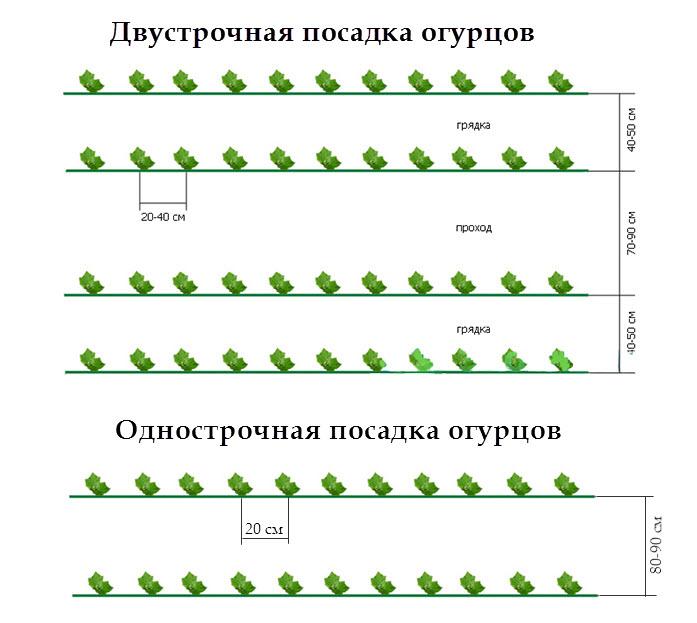 Схематичные изображения способов посадки огурцов
