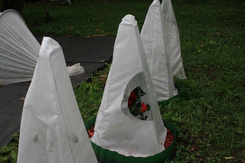 Фото каркасных укрытий для роз