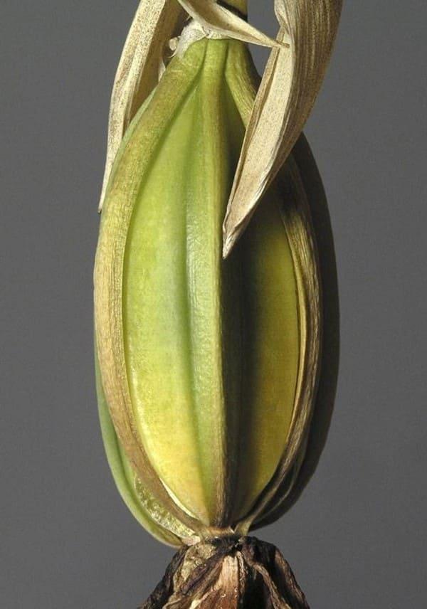 Орхидея фото 8