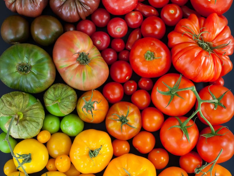 Фото разных сортов помидоров