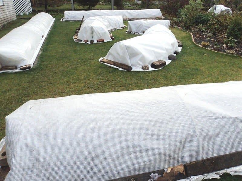 Фото укрытых на зиму роз