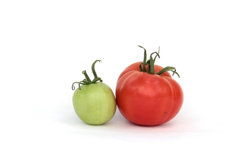 Фото зеленого и спелого помидоров