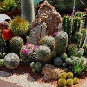 Фото кактусов