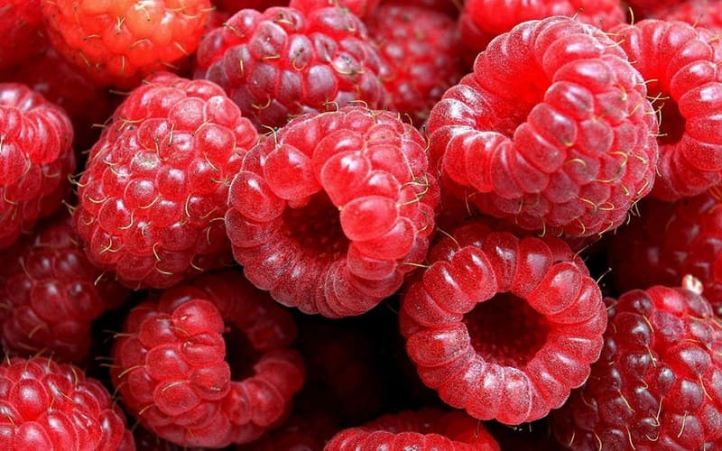 Фото ягод малины