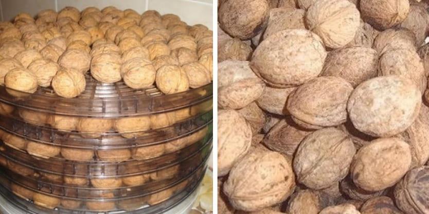 Фото: орехи в электросушилке