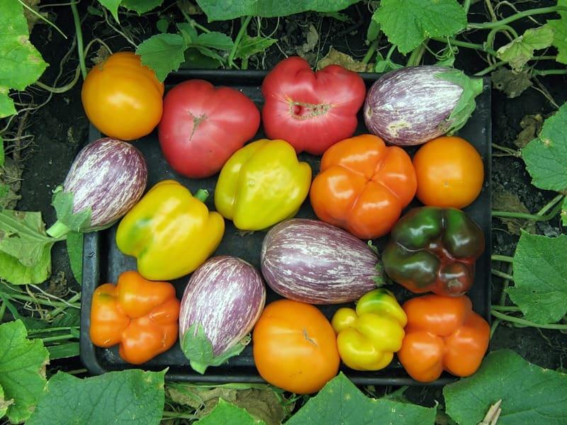 Фото томатных овощей