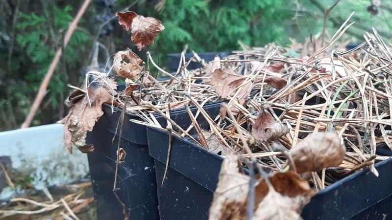 Фото проращивания княженики в ящиках