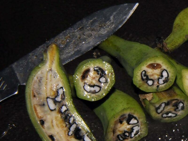 Фото диких бананов