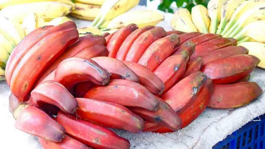 Фото красных бананов