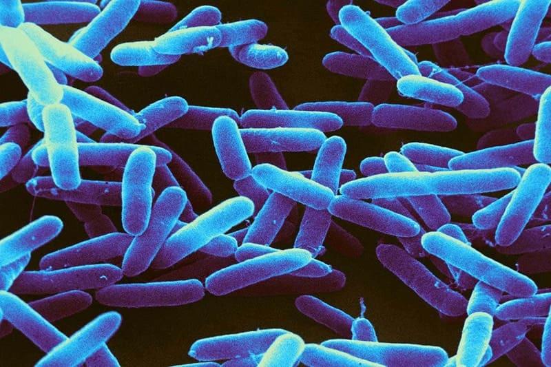 Фото бактерии