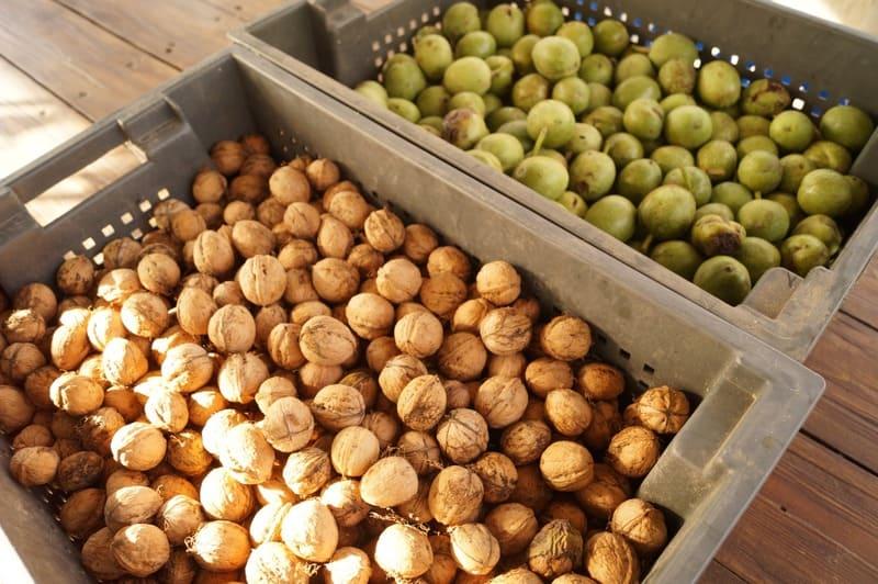 Фото хранения плодов