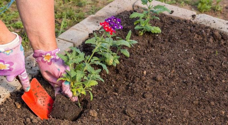 Фото высадки растений в открытый грунт