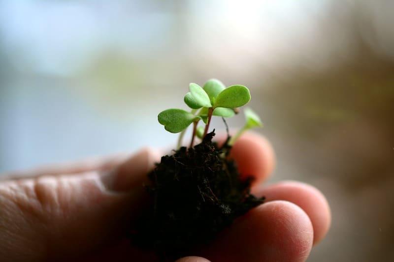 Фото ростка в пальцах