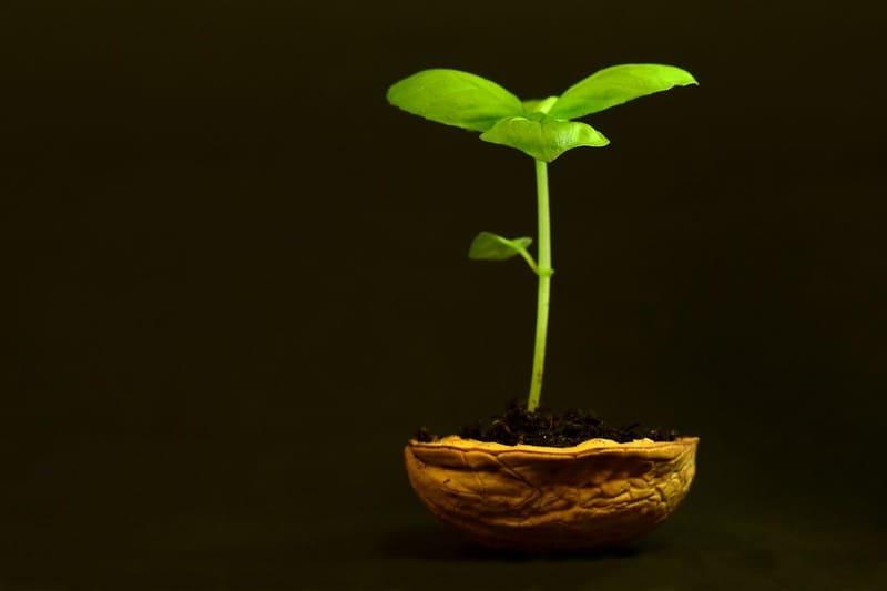 Фото ростка в скорлупе