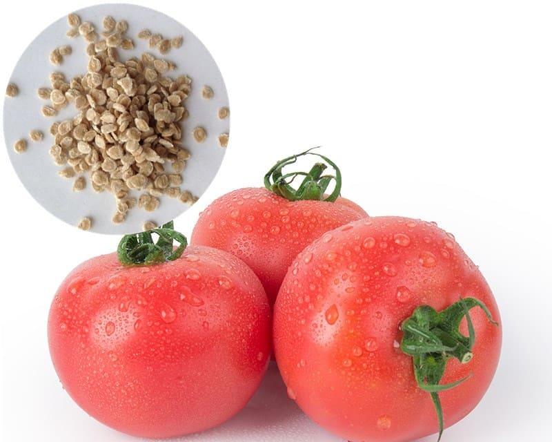 Фото помидора и семян