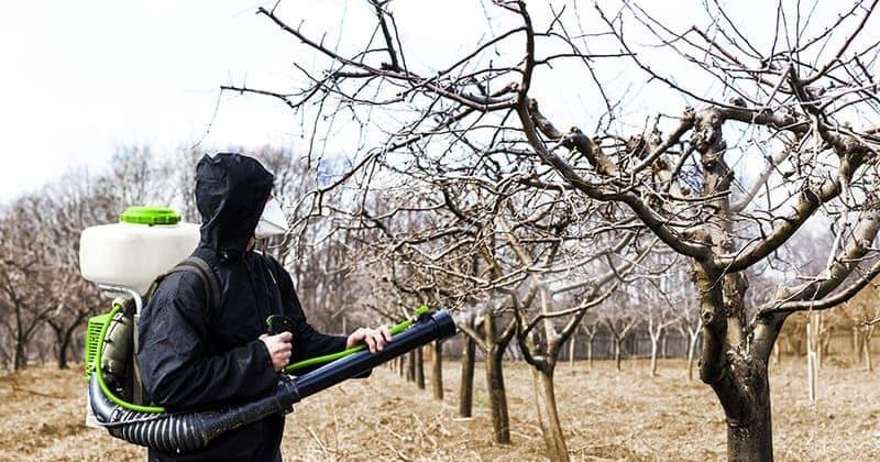Фото опрыскивания деревьев