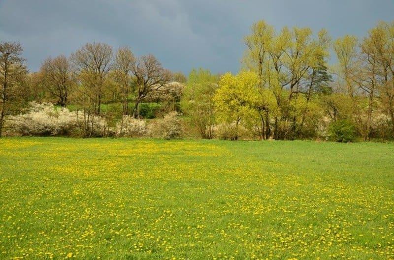 Фото весенней поляны