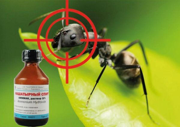 нашатырный спирт от муравьев фото